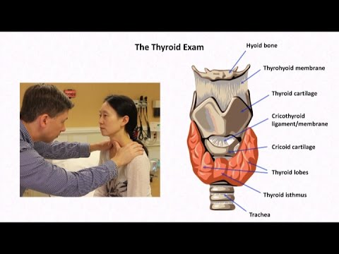 thyroid physical exam documentation
